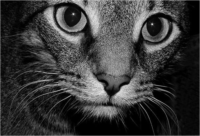 cat eyes foto. Cat Eyes